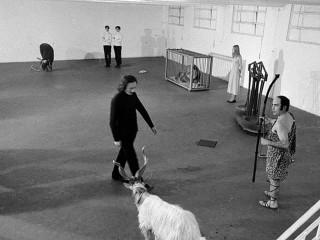 Roma 1970. Mostra  Zodiaco di Gino De Dominicis dove l'artista rappresentò concretamente i dodici segni zodiacali esponendo un toro, un leone vivo, una giovane vergine e due pesci morti appoggiati sul pavimento.